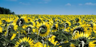 Weather in Prague