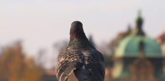 Weather in Prague – sometimes the weather plays an interesting game with us